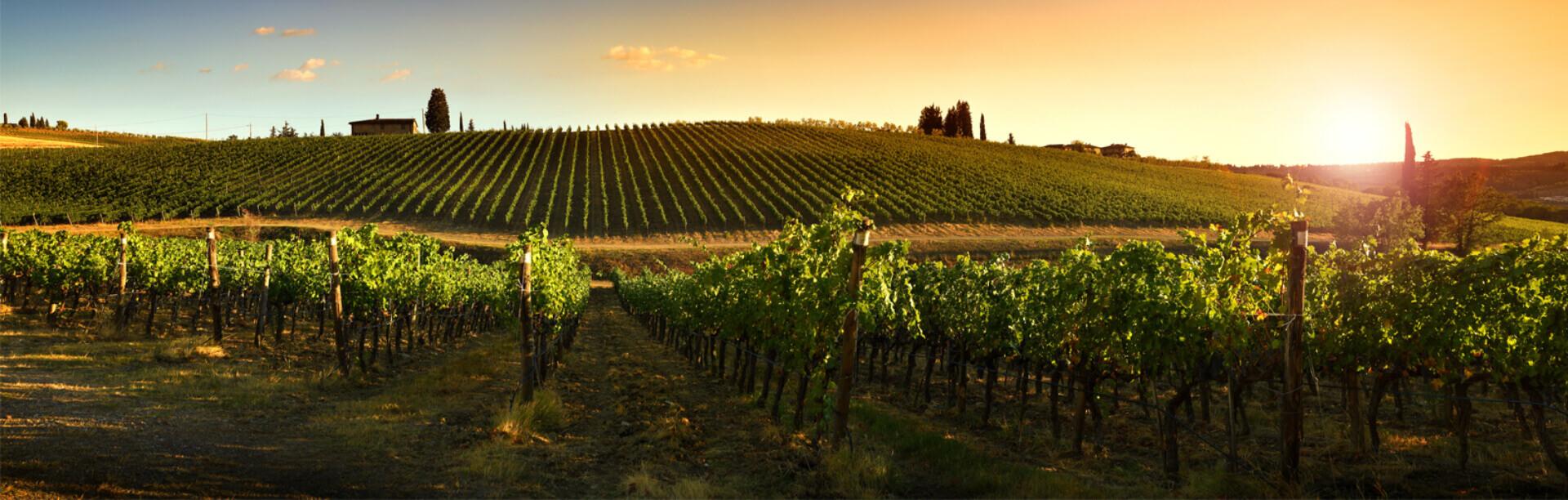 Prosit - Vino dall'eccellenza italiana